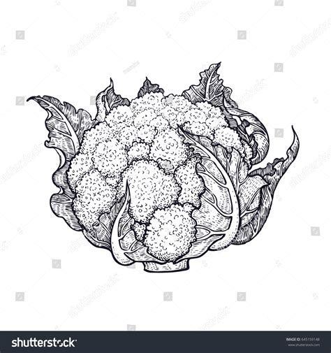 Cauliflower Hand Drawing Vegetables Vector Art Stock Vector 645159148 Shutterstock