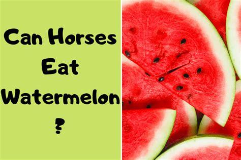 horses watermelon eat horse
