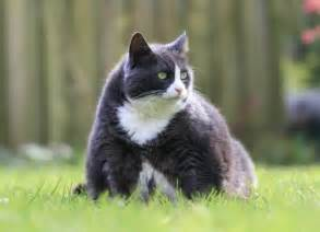 cat wont eat or drink cat won t eat or drink weight loss computingtoday