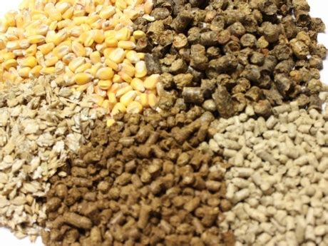 animal feeds bird feed supplier bulgaria   export