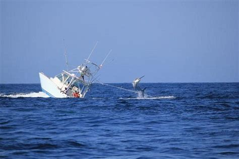 Sinking Big Boats by Marlin Wins The Fish That Sank An Entire Boat And