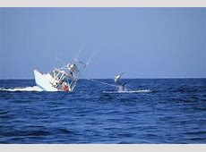 Marlin wins! The massive fish that sank an entire boat and