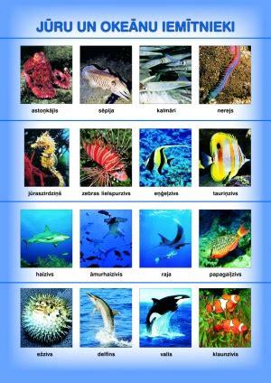 Zvaigzne ABC - Jūru un okeānu iemītnieki (A4)