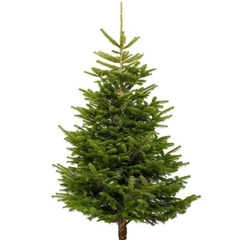 best rated fresh trees delivered to home nordmann fir real trees fresh cut 4 10ft free uk delivery