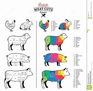 British Meat Cuts Diagrams Stock Vector  Illustration Of