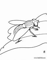 Coloring Cockroach Pages Beetle Beetlejuice Cartoon Getcolorings Printable Outline Vector Frightening sketch template