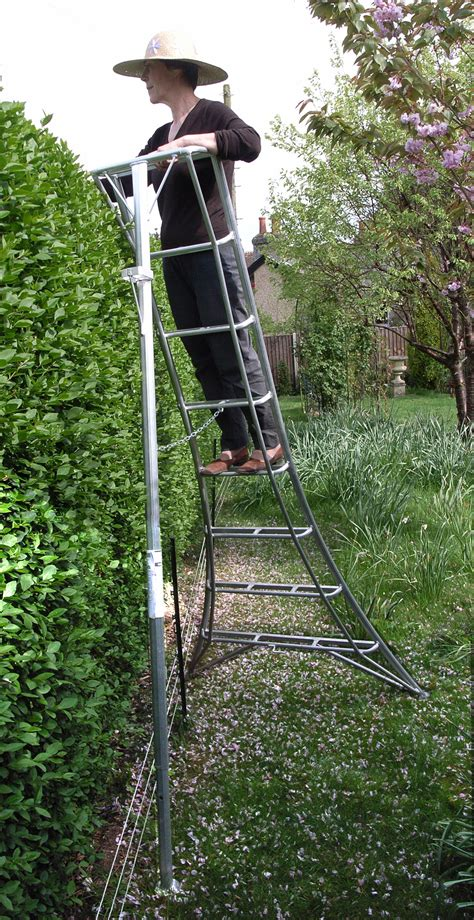 niwaki tripod ladders  large topiary  hedges