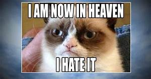 Grumpy Cat World Bids Farewell To Meme Sensation
