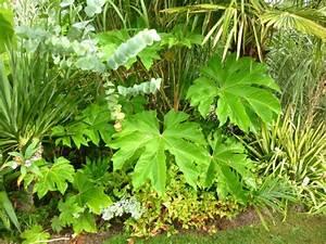 Plantes Exotiques Rustiques : aralia kalopanax le blog des plantes exotiques ~ Melissatoandfro.com Idées de Décoration