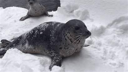 Animals Zookeeper Heavy Oregon Snowfall Skis Blast