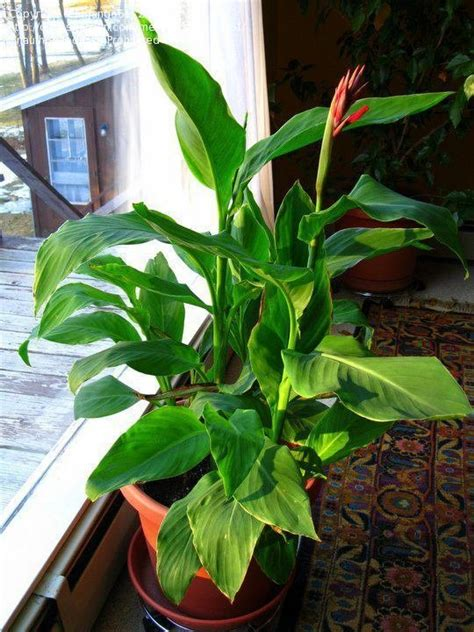 plant identification closed tropical houseplant id 1 by