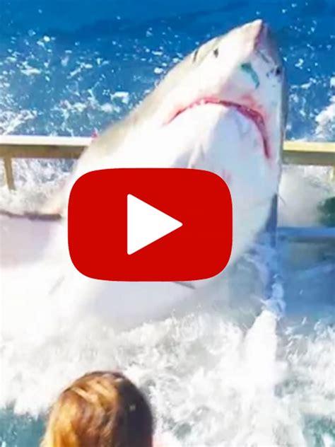 weisser hai durchbricht kaefig schock vor guadaloupe galade