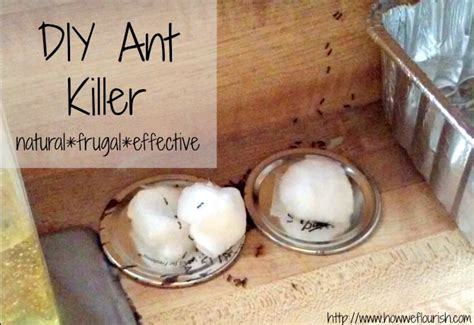 homemade ant killer   flourish