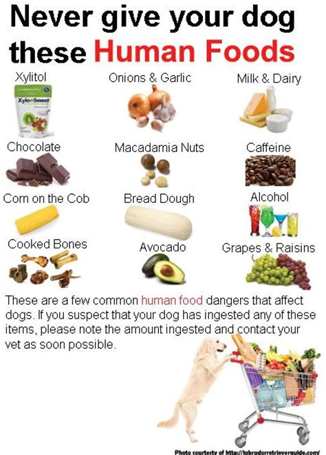 what cuisine what food are poisonous to dogs food ideas