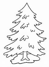 Pine Coloring Pages Trees Tree Clip Under Simple Drawings sketch template
