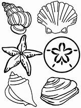 Seashells Pages Cartoon Colouring Clipartbest Coloring Seashell Sea Shells Clipart sketch template