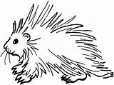 Porcupine Ages Educative sketch template