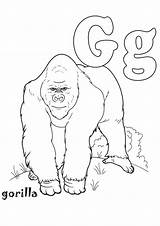 Coloring Gorilla Colouring Momjunction Sheets Male sketch template