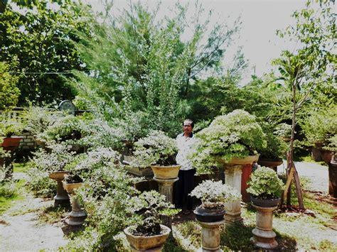 bonsai pak hariyanto langgeng asri bonsai bonsai tuban