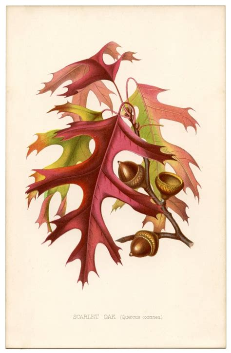 Fall Leaves Vintage Printable - Gorgeous! - The Graphics Fairy