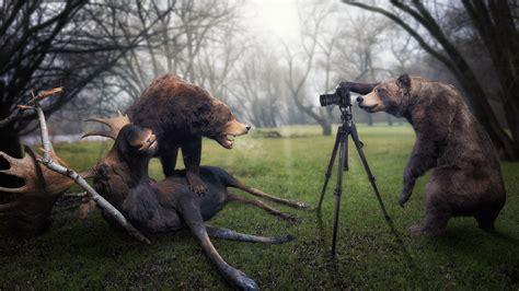 trophy moose photographer bear wallpaper