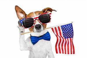 Dog Listening On 4th Of July Stock Image - Image of jack ...