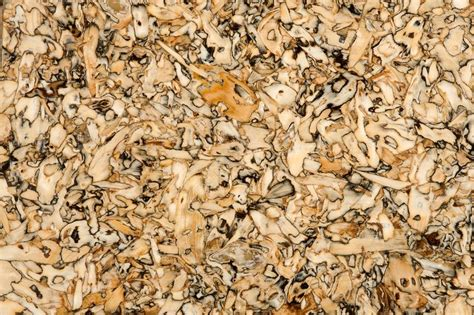 sunflower seed board stock image  science