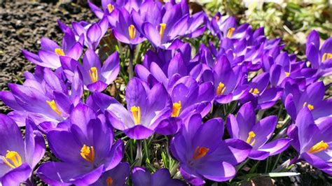 Mūsu dārzā pavasaris... - YouTube