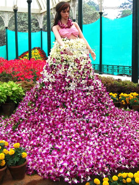 show the picture of flowers lalbagh photos check out lalbagh photos cntravel