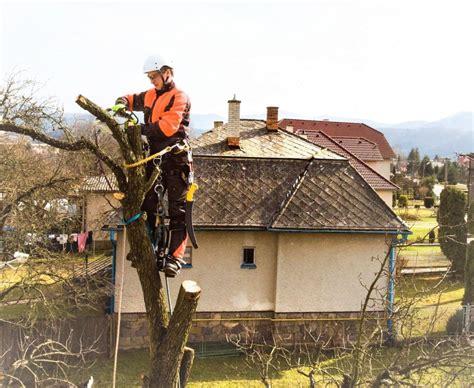 lumberjack  chainsaw  harness pruning  tree