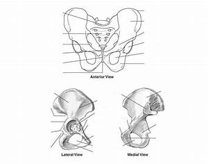 Pelvic Girdle Quiz