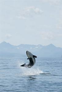 Orca Aware  Orca Of The World