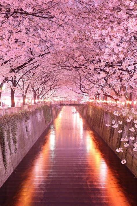 wonderful pink cherry blossom wallpaper iphone