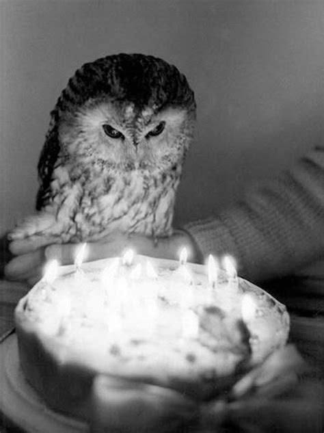 Happy Birthday Owl Images Owl Happy And Cakes On