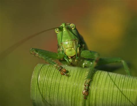 mind blowing insect pictures  professional tips