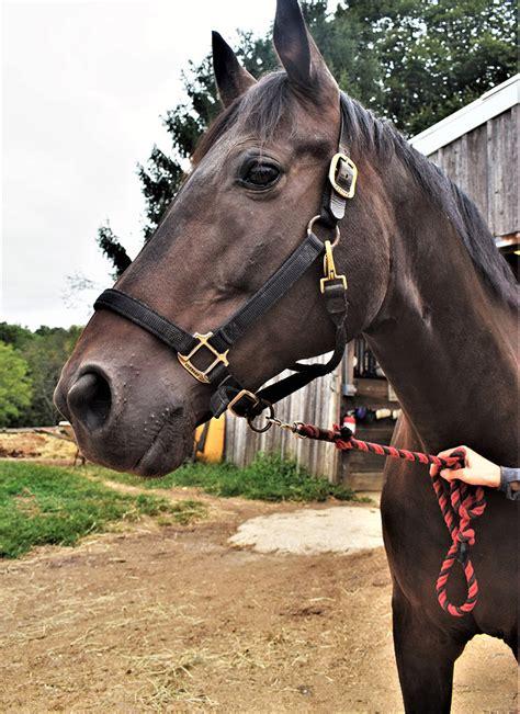 thorncroft center equestrian donations horses kind riding program