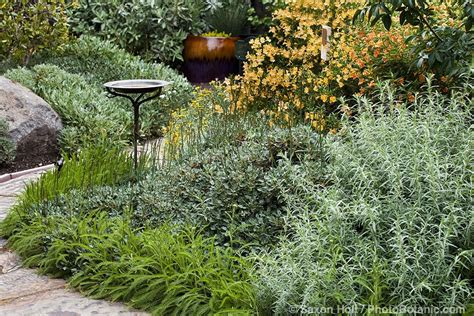 california plant gardens gardening with native plants