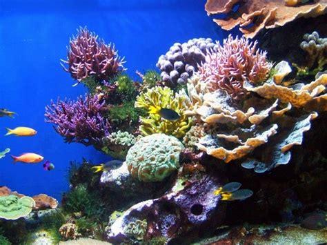 types  corals   reef tank