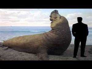 25 Largest Animals On Earth - YouTube