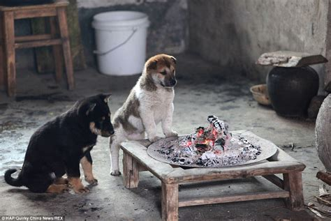 will a heat l keep a dog warm puppies huddle round canteen fire on a cold day in china