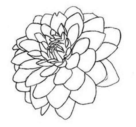 drawing flowers dahlia drawings pinterest