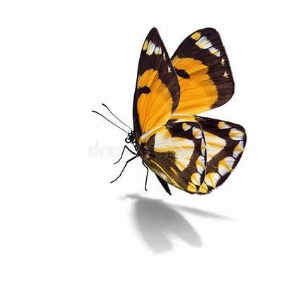Yellow Butterfly Gialla Beau Guindineau Farfalla Mariposa