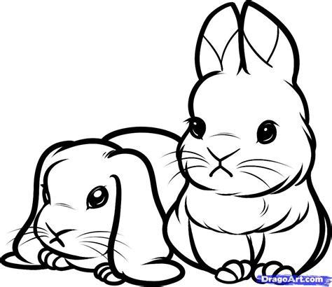draw baby rabbits baby rabbits step  step