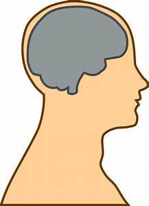 Medical Diagram Of Brain Clip Art At Clker Com