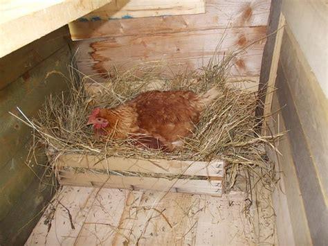 Come Costruire Una Gabbia Per Galline - come costruire un pollaio artigianale in muratura o legno