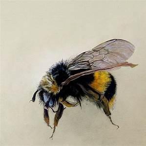 Bumble Bee Scientific Drawing | www.pixshark.com - Images ...