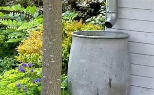 Rasen Voller Moos : gartenbau und gartengestaltung ratgeber und wissenswertes bei garten und pflanzen ~ Watch28wear.com Haus und Dekorationen