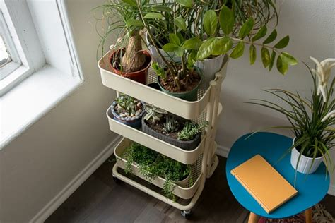 houseplant starter kit reviews by wirecutter a new york