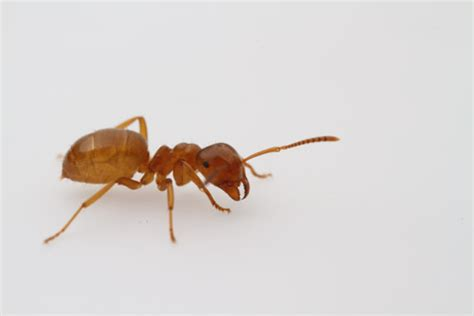 ant service advancement in ant control services perth