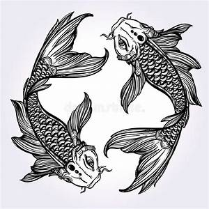 Elegant Koi Carp Fish Illustration. Stock Vector ...